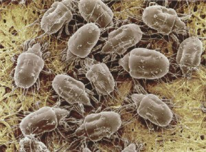 Reducing Dust Mites In Your Home Aqualux Carpet Cleaning